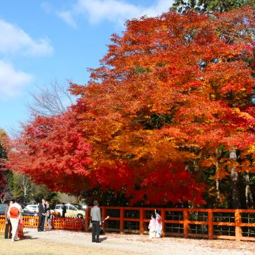 Best Photo spots for autumn leaves in Kyoto