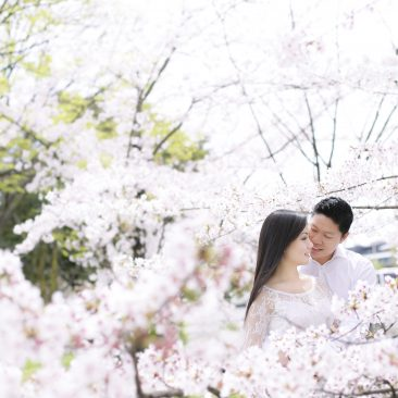 Perfect cherry blossom for newlyweds from U.S.