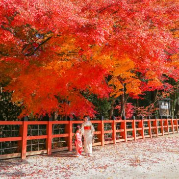 Red leaves will welcome you in Kyoto, Japan.