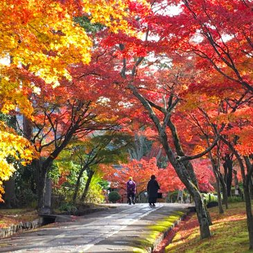 For amateur photographer in Kyoto. Red autumn leaves in Shinnyodo-temple.